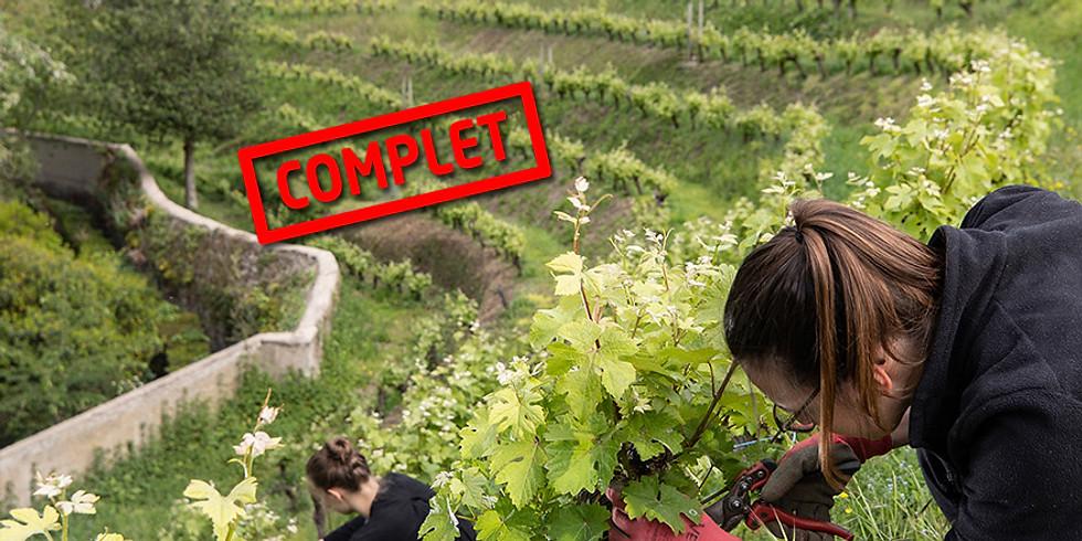 Atelier taille de la vigne & dégustation à l'abbaye Saint-Nicolas