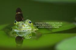 rana y mariposa