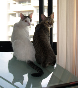 Gai and Lugs kittens2.jpg