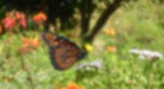 DSCN3214_edited.jpg