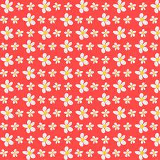 daisy love