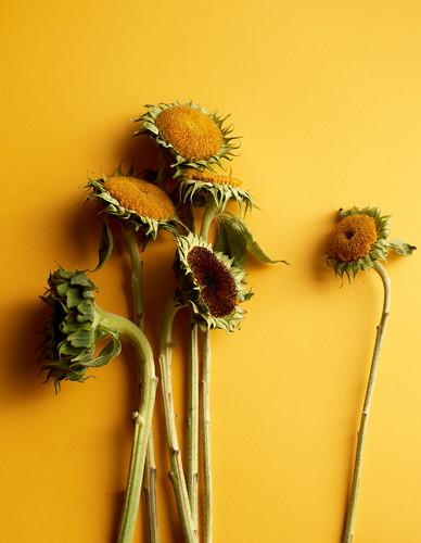 03.sunflowers.jpg