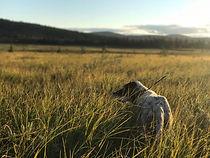 Tamfugl trening Hommelfjellet kennel