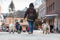 Ferieopphold for hunden din Hommelfjellet kennel
