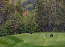 Bears on #5. Better Lay Up