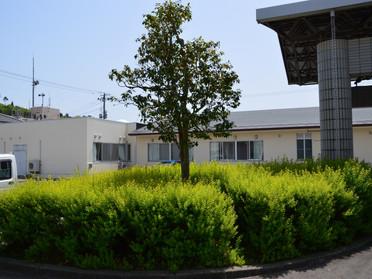 病院正面玄関前の植木の刈り込みを行いました
