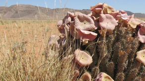 Fighting the Illegal Trade in Endangered Plants Through a Cross-Disciplinary Approach