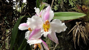 Trends in illegal trade of wild ornamental orchids, and possible solutions