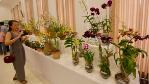 Cambodia news: Orchid conservation needs more attention, says official