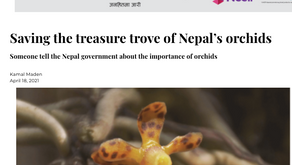 Orchid trade highlighted in the Nepali Times