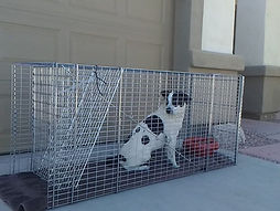 HOME-PAGE-dog-in-trap-5-1024x768.jpg