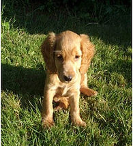 Me, Milli as a puppy in 2009.