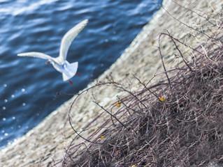 ציפור פצועה