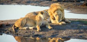 Game Drive Safaris, Camping's, Picnic Sits Destinations Southern Africa