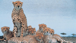 Marketing Africa Tourism Destinations Game Drive Safaris West Africa Holiday Limelight Media