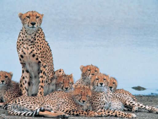 Game Drive Safaris West Africa Holiday Destinations and Attraction's