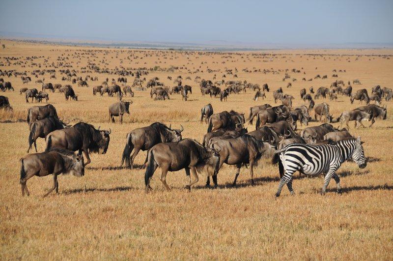 Masai Mara 7