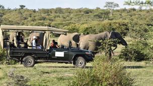 Game Drive Safaris Camping & Picnic East Africa