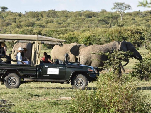 Game Drive Safaris Camping & Picnic East Africa