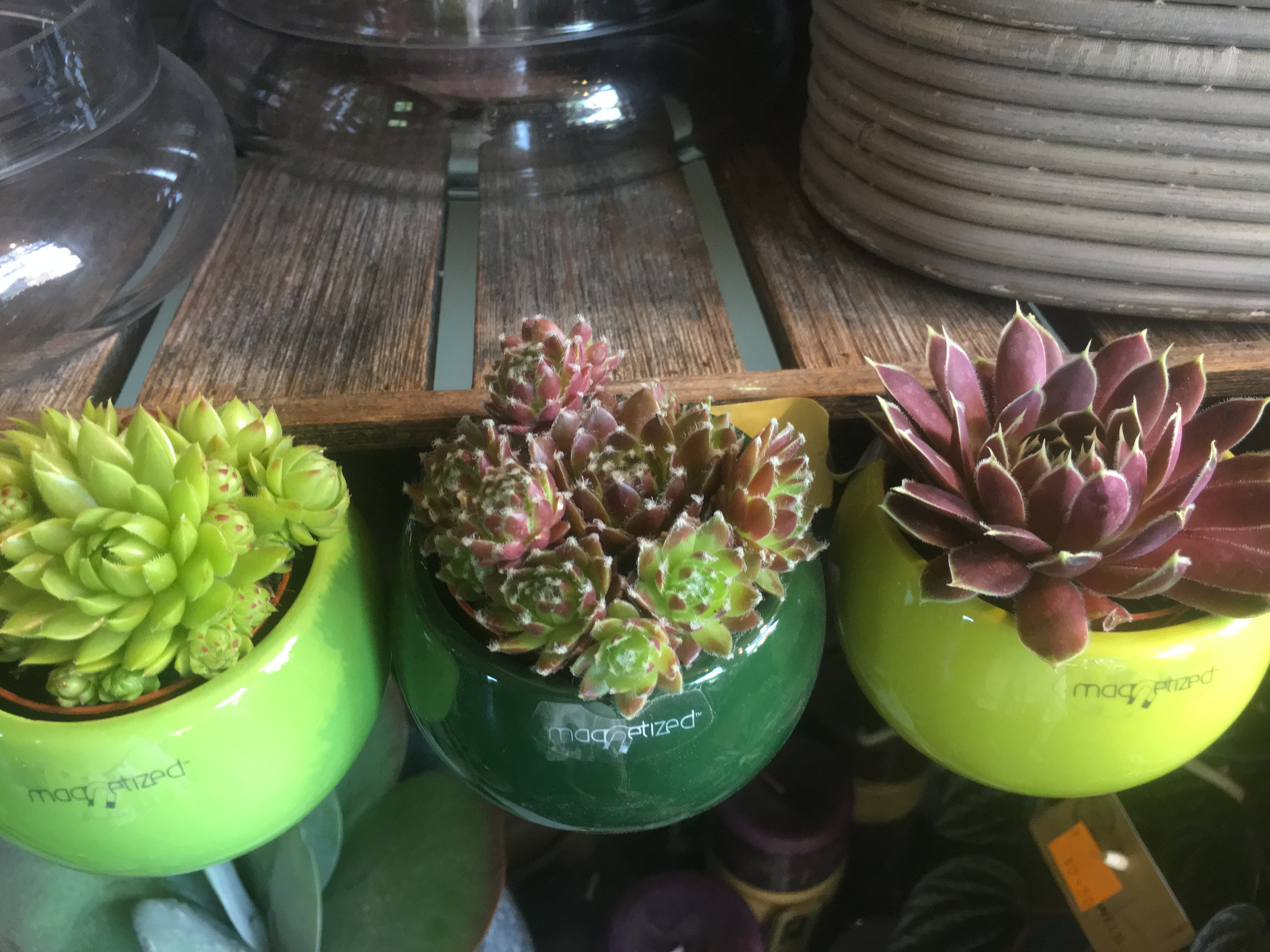 kleine magneetpotjes met vetplant