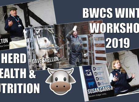 BWCS Winter Workshop November 2019