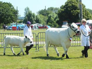 Shropshire County Show 2021