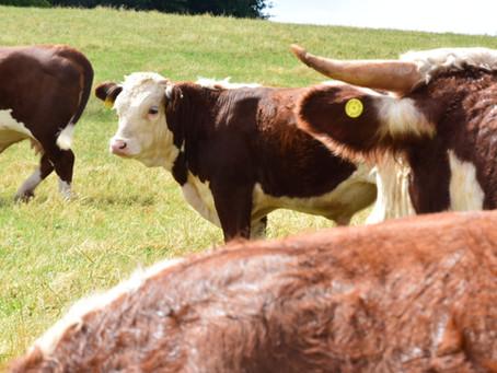 AGM & Summer Herd Visit 2021