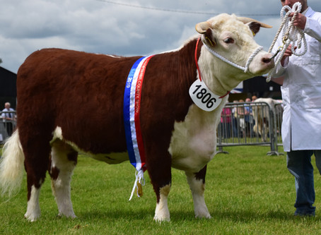 First time exhibitors bag a treble of Traditional Championships!