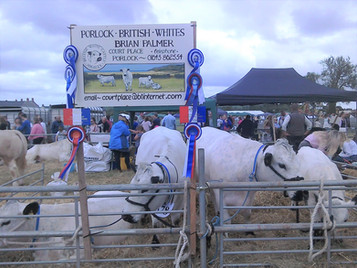 Mid-Somerset Show