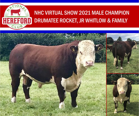 National Hereford Virtual Show 2021