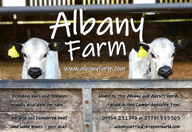 Albany 2020