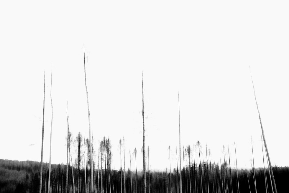 Waldsterben_008.jpg