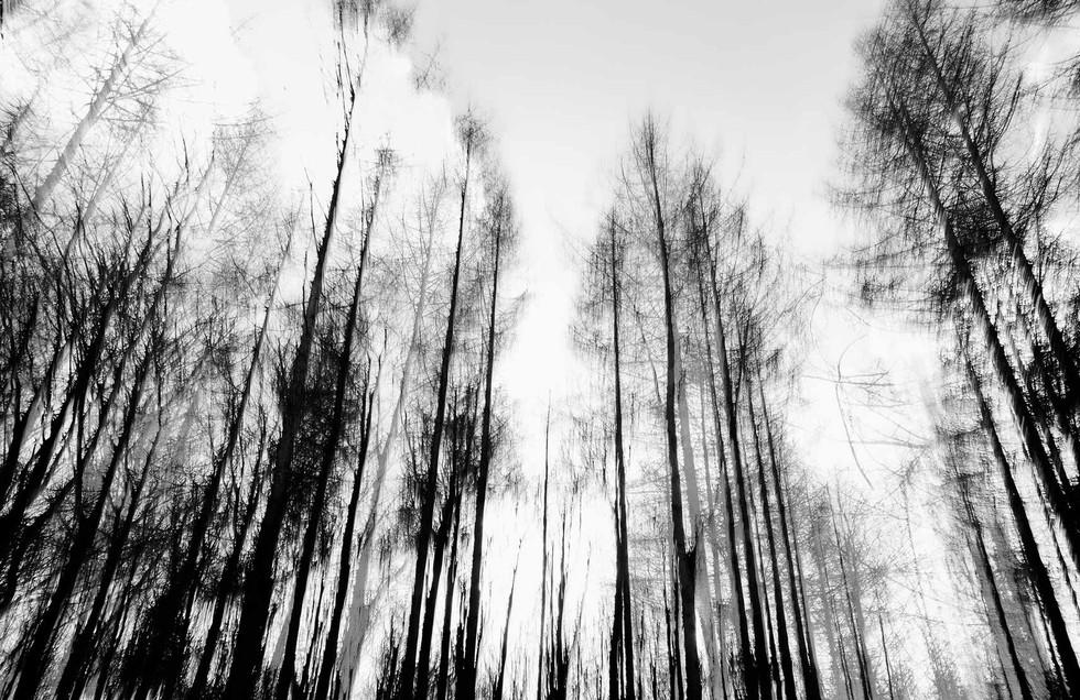 Waldsterben_002.jpg