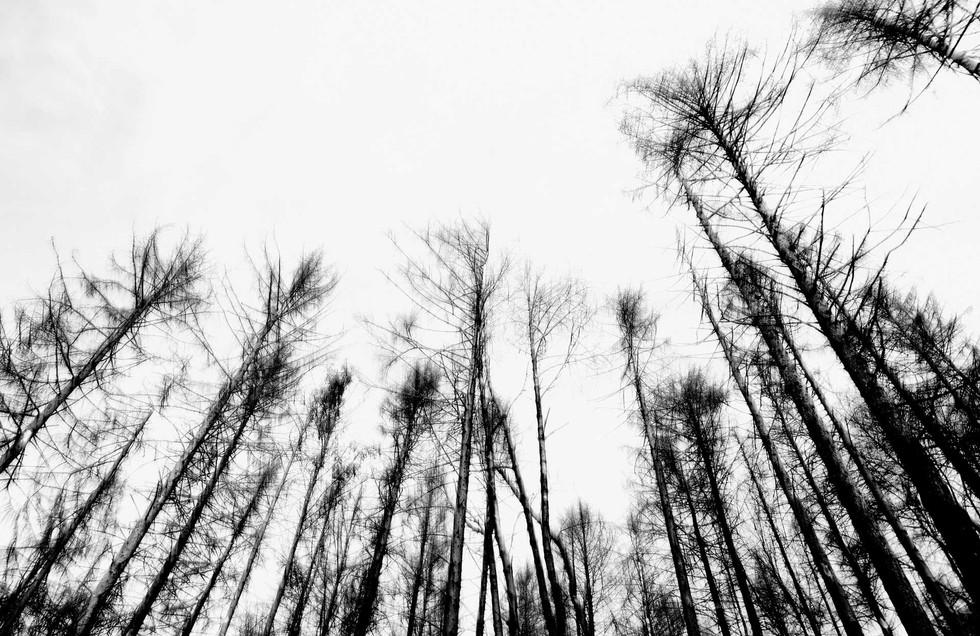 Waldsterben_005.jpg