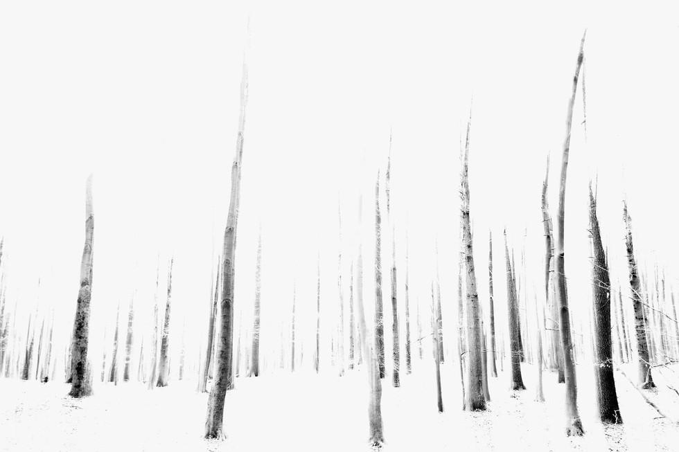 Waldsterben_001.jpg