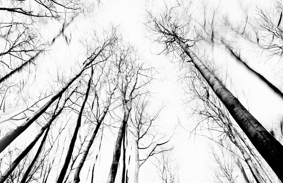 Waldsterben_004.jpg