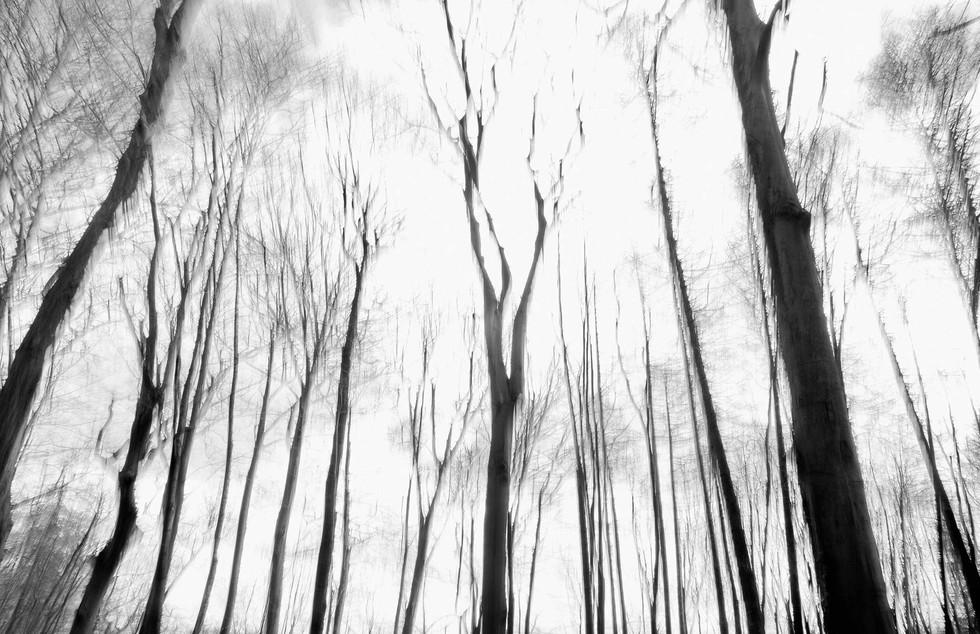 Waldsterben_009.jpg