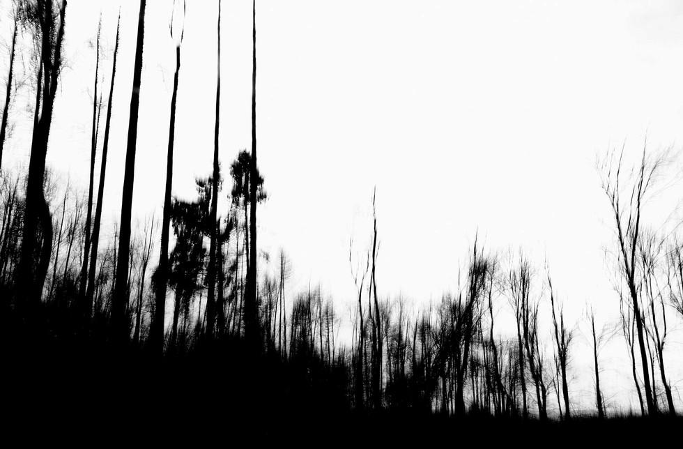 Waldsterben_006.jpg