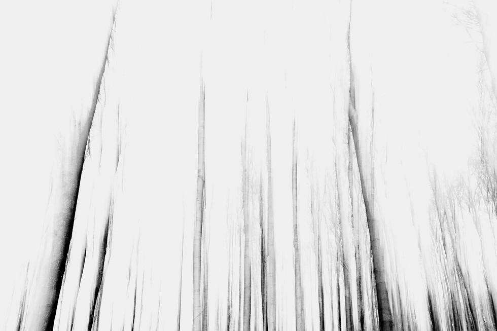 Waldsterben_003.jpg