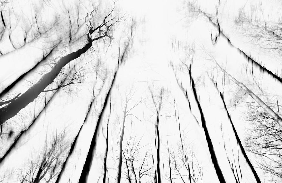 Waldsterben_007.jpg