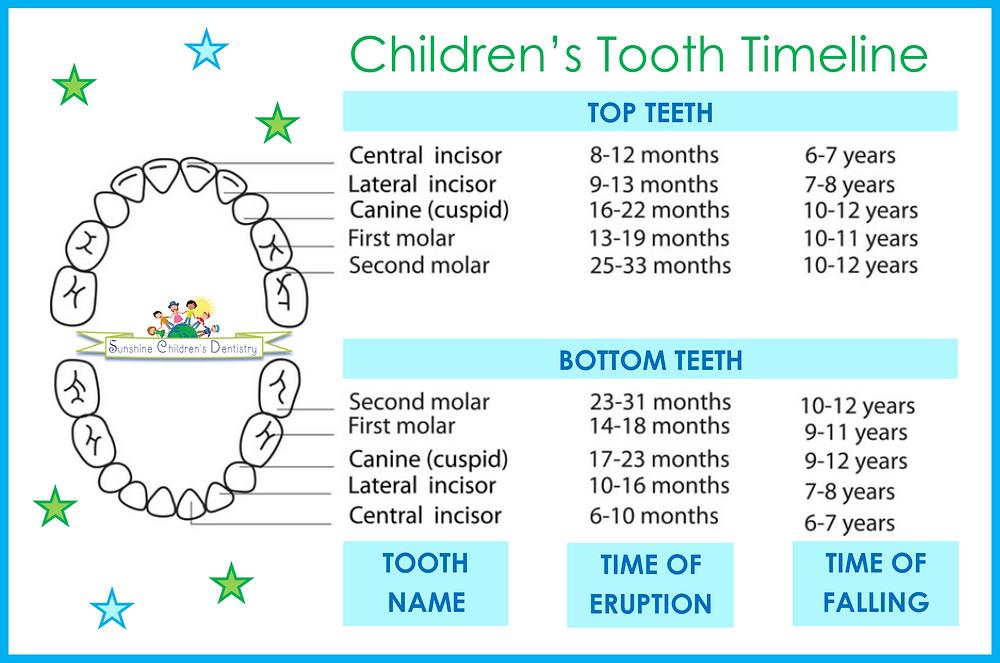 Children's Tooth Timeline