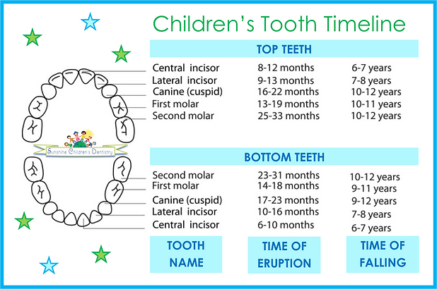 a schedule of baby teeth eruption falling out and how to care for them