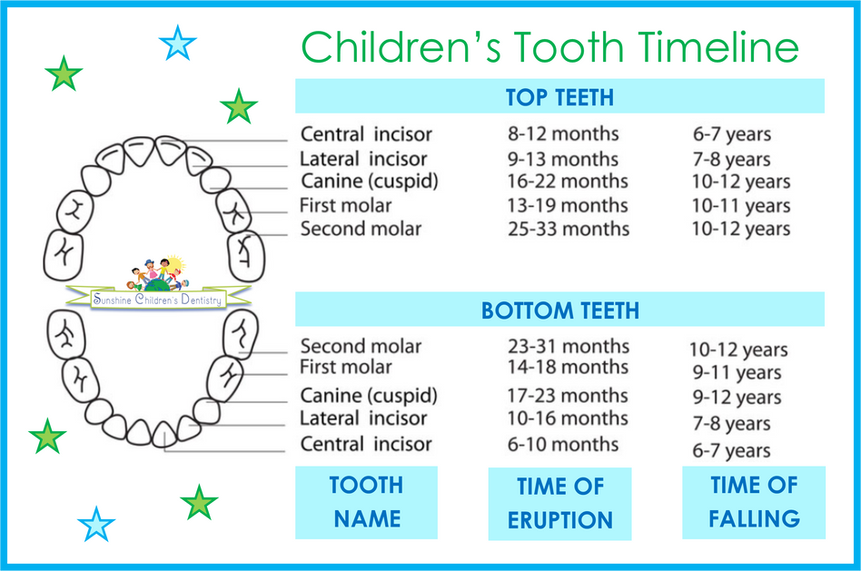 """All I want for Christmas is my 2 Front Teeth."" - a schedule of BABY TEETH eruption, falli"