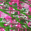 Thumbnail: Fluent Pink and Green Modal Scarf