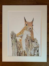 Mounted print red squirrel.jpg