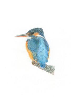 Kingfisher June 2020.jpg
