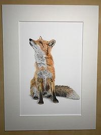 Fox mounted print.JPG