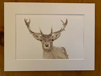Mounted stag print.jpg