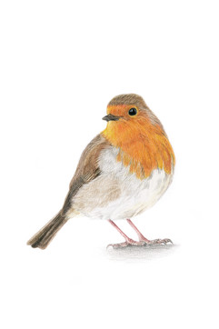 Robin A4.jpg