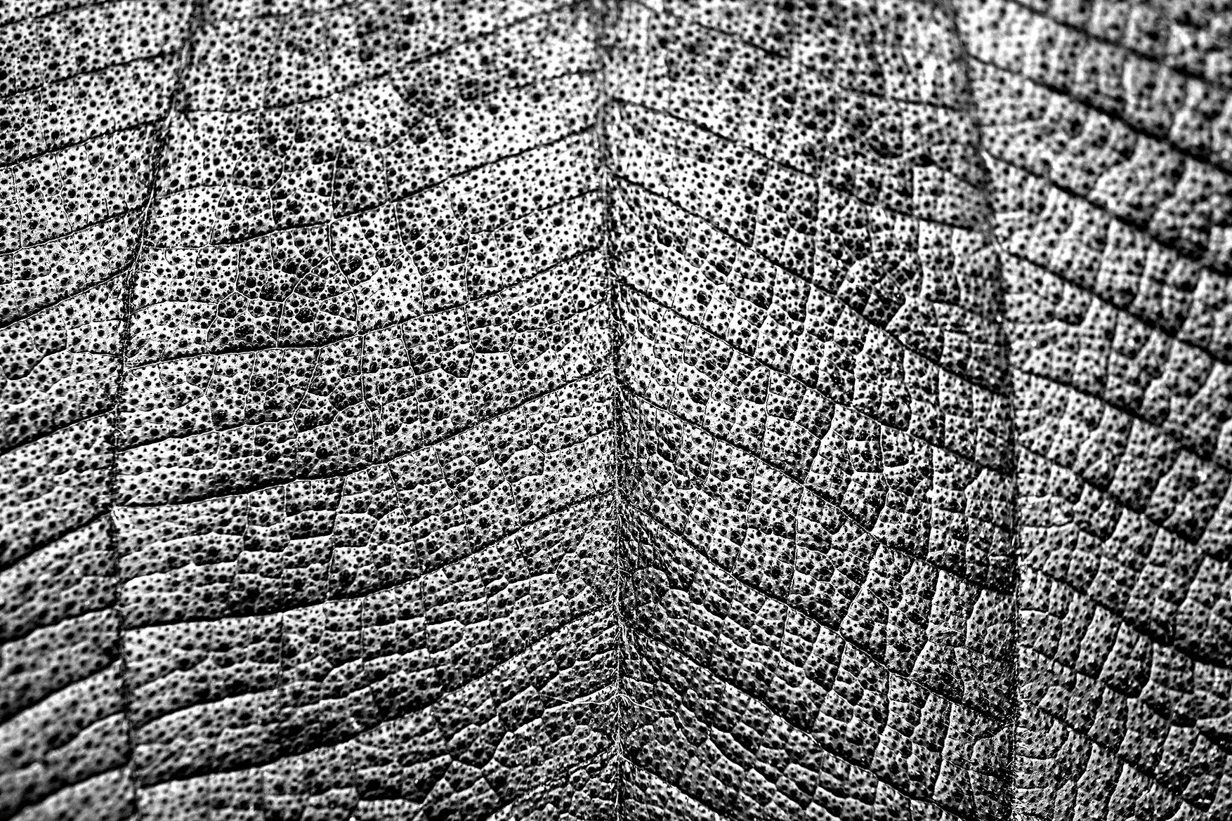 Close Up von Blatt